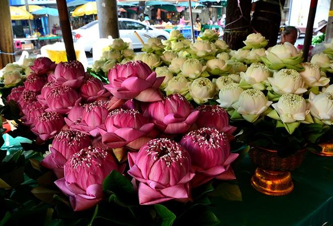 Hình ảnh chiêm ngưỡng 10 chợ hoa rực rỡ nhất thế giới