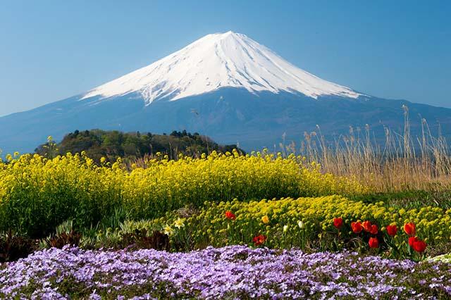Hình ảnh 8 mẹo vặt du lịch Nhật Bản tiết kiệm mùa Tết