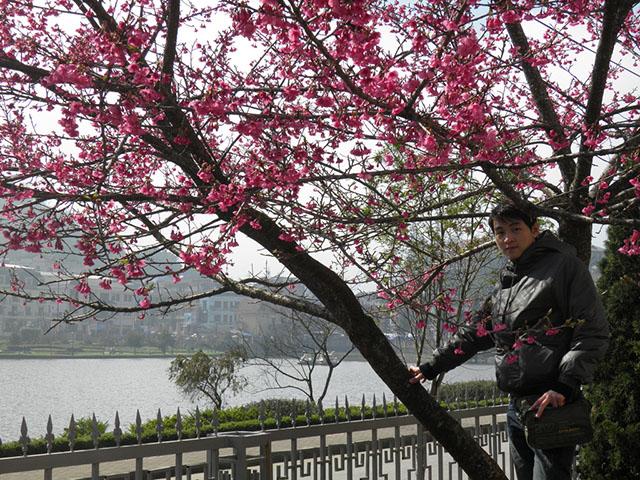 Hình ảnh chiêm ngưỡng sắc hoa anh đào lãng mạn ở Sa Pa
