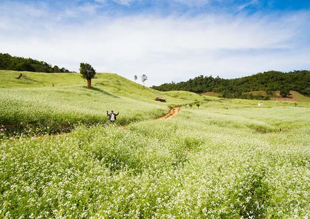 Hình ảnh những điểm du lịch trong nước tuyệt vời nhất mùa Tết 2015