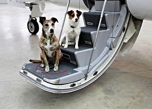 Hình ảnh những lưu ý khi mang động vật lên máy bay