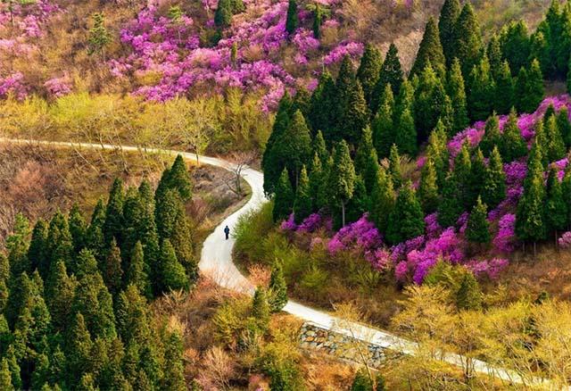 Hình ảnh trải nghiệm sắc xuân ở Hàn Quốc cùng vé máy bay khuyến mãi 0 đồng