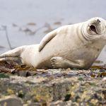 Những bức ảnh hài hước của các loài động vật