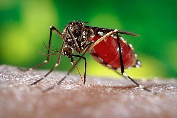 su-that-khung-khiep-ve-virus-zika-02