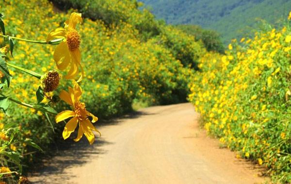 Những con đường Đà Lạt rực rỡ bởi hoa Dà Quỳ