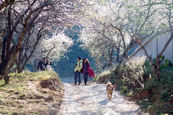 Mùa xuân - thời điểm lý tưởng để di du lịch