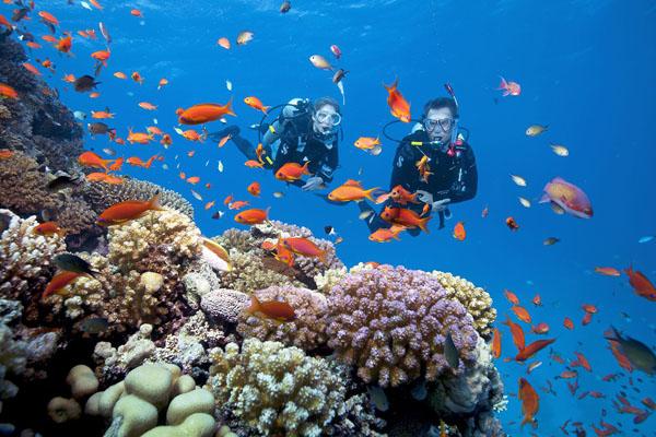 Lặn ngắm san hô ở Phú Quốc