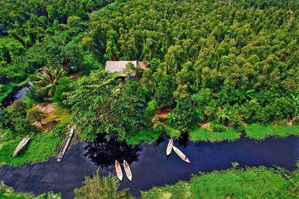 Một góc rừng U Minh Hạ