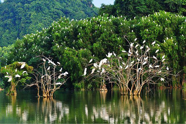 Vườn chim Ngọc Hiển - Cà Mau